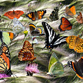 Butterfly Collage by David Salter