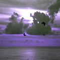 Butterfly Dreams And A Purple Sky by Rosalie Scanlon