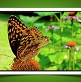 Butterfly For Earth Day by Jane Alexander