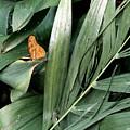 Butterfly Garden by Jhiatt