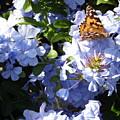 Butterfly IIi by Edward Wolverton