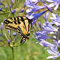 Butterfly In Blue by Gail Salitui