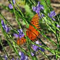 Butterfly In Blue by Peg Urban