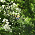 Butterfly In Muted Green Background by David Arment