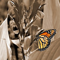 Butterfly In Sepia by Lauren Radke