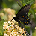Butterfly On Flower by Christopher Purcell