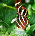 Butterfly Overlay by Donna Bentley