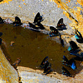 Butterfly Pool by David Lee Thompson