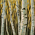 Buttery Birches by Art Nomad Sandra  Hansen