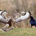 Buzzard Landing by Bob Kemp
