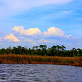 Cabbage Palms And Salt Marsh Grasses Of The Waccasassa Preserve by Barbara Bowen