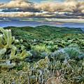 Cactus Rabbit by Blake Richards