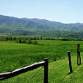Cades Cove View by Nancy Mueller
