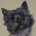 Cairn Terrier by Susan Herber