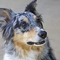 Calico Dog by Robert Joseph