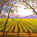 California Napa Valley Vineyard by Connie Tom