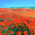 California Poppies by Charles and Stacey Matthews