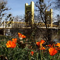 California Poppies With The Slightly Photographically Blurred Sacramento Tower Bridge In The Back by Wingsdomain Art and Photography