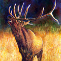 Call Of The Wild Elk by JoLyn Holladay