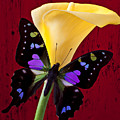 Calla Lily And Purple Black Butterfly by Garry Gay