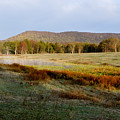 Canaan Valley State Park by Thomas R Fletcher