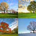 Canadian Seasons by Mircea Costina Photography