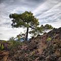 Canary Pines Nr1 by Jouko Lehto