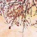 Canopy by Rebecca Cozart
