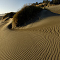 Cape Blanco Sands by Stephen  Thompson