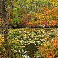 Cape Cod Kettle Pond Foliage by John Burk