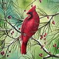 Cardinal by David G Paul