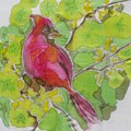 Cardinal In Palo Verde by Kathy Mitchell