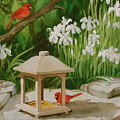 Cardinals Feeding by Faye Ziegler