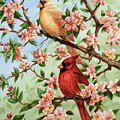 Cardinals In Apple Blossoms by Michael Scherer