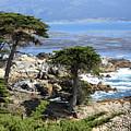 Carmel Seaside With Cypresses by Carol Groenen