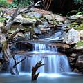 Carolina Mountain Stream by Al Blackford