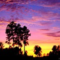 Carolina Pine Sunset by Patricia L Davidson