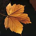 Cascade Orange by Michael Greiner