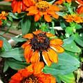 Cascading Orange by Nikki Mansur