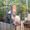 Cat In A Birdbath by Rachel Strawbridge