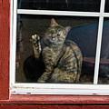 Cat In The Red  Window by Joe  Palermo