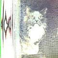 Cat by Lenore Senior
