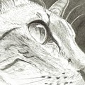 Cat Side Profile by Joshua Hullender