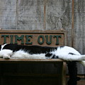 Cat Time Out by Kevin Dunham