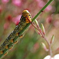 Caterpillar Munching by Jean Booth