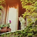 Cats Eye View by JAMART Photography