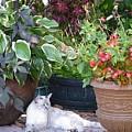 Cat's Meow by Rachel Strawbridge