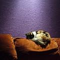 Cats Sleep In Odd Places by Geerah Baden-Karamally