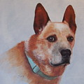 Cattle Dog by Janice M Booth