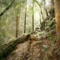 Cavern Walk ..... by Richie Dean